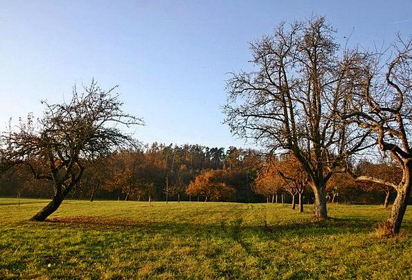Orchard Plantation Landscapes Fall Nature Nature C