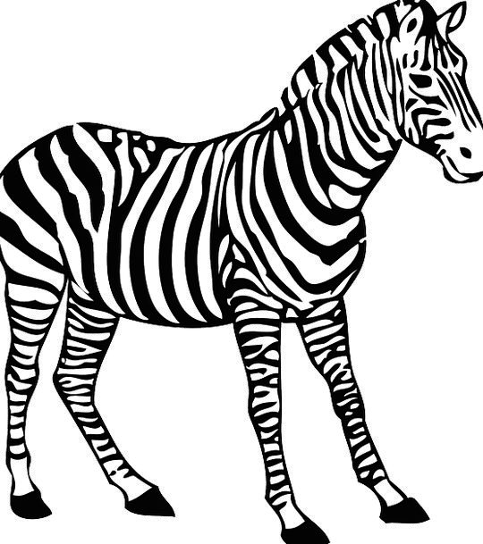 Zebra Strips Hooves Stripes Wildlife Nature Africa