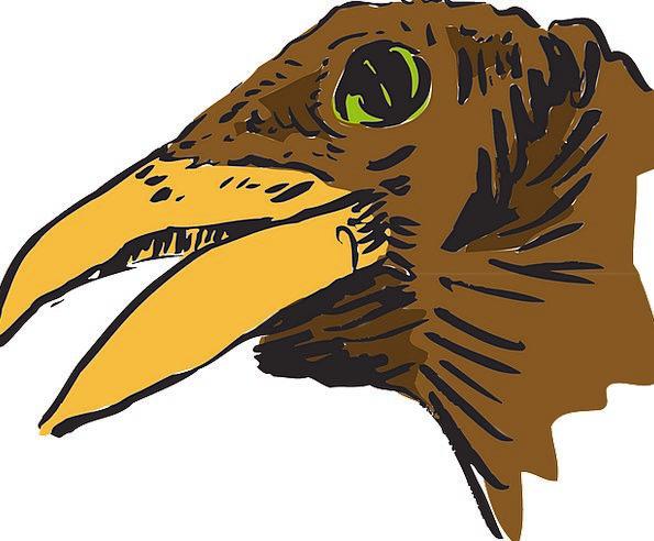 Bird Fowl Skull Beak Bill Head Brown Chocolate Fre
