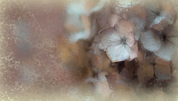 Flowers Plants Digital Painting Digital Art Abstra