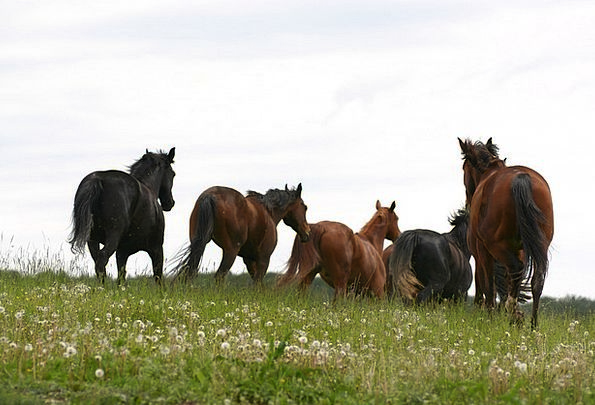 Horses Cattle Landscapes Field Nature Nature Count