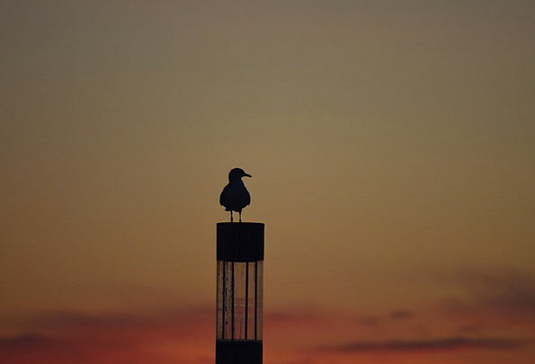 Seagull Vacation Sundown Travel Outline Plan Sunse