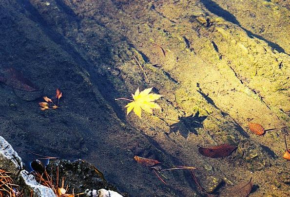 Autumn Fall Landscapes Nature The Leaves Autumn Le