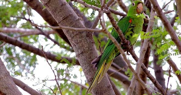Bird Fowl Imitator Nature Countryside Parrot Marit
