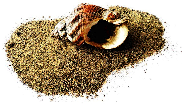 Shell Bomb Vacation Seashore Travel Sand Shingle B