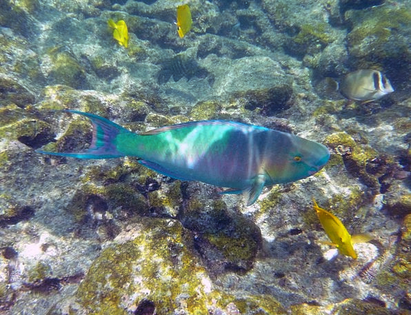 Rainbow Multicolored Angle Underwater Submerged Fi