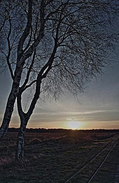Birch Cane Vacation Sundown Travel A Formative Sun