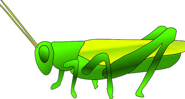 Grass Lawn Green Lime Hopper Insect Bug Grasshoppe