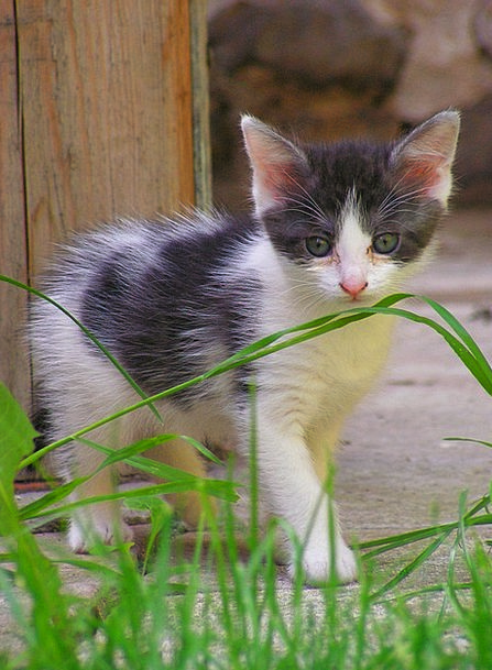 Kitten Grass Lawn Black And White Black And White