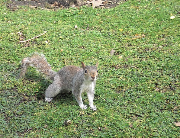 Squirrel Collector Rodent Nager Animal Physical Fu