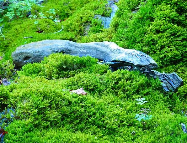 Moss Timber Green Lime Wood Water Aquatic Wet Rain
