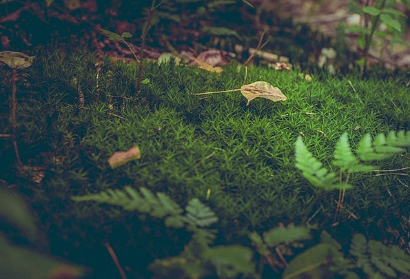 Moss Landscapes Understory Nature Leaves Greenerie