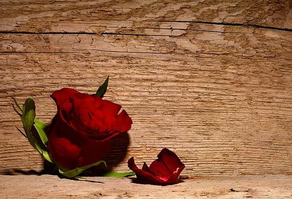 Rose Design Textures Bloodshot Backgrounds Flower