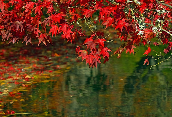Autumn Landscapes Greeneries Nature Autumnal Leave