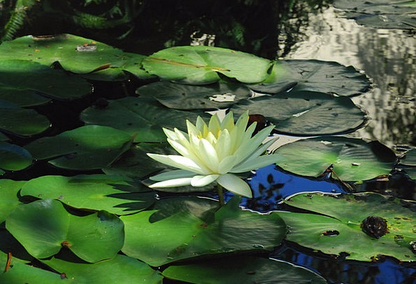 Flower Floret Landscapes Aquatic Nature Water Flow