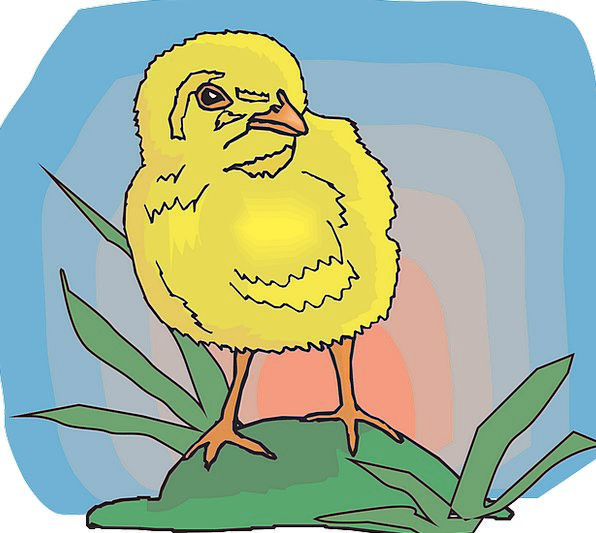 Baby Darling Fowl Chicks Chickens Bird Grass Chick