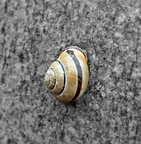 Snail Physical Nature Countryside Animal Shell Bom