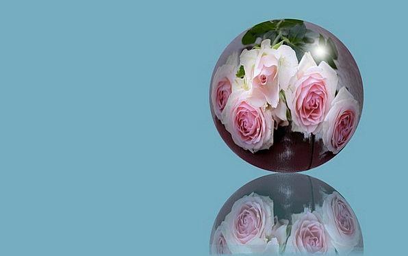 Sphere Compass Globe Ball Flowers Plants Reflectio