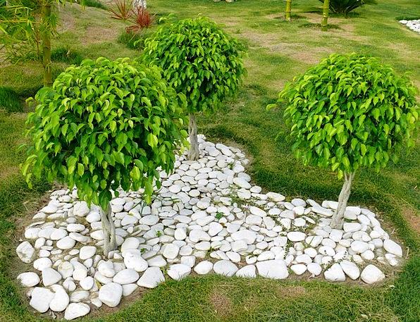 Three Landscapes Plants Nature Ficus Trees Flora B