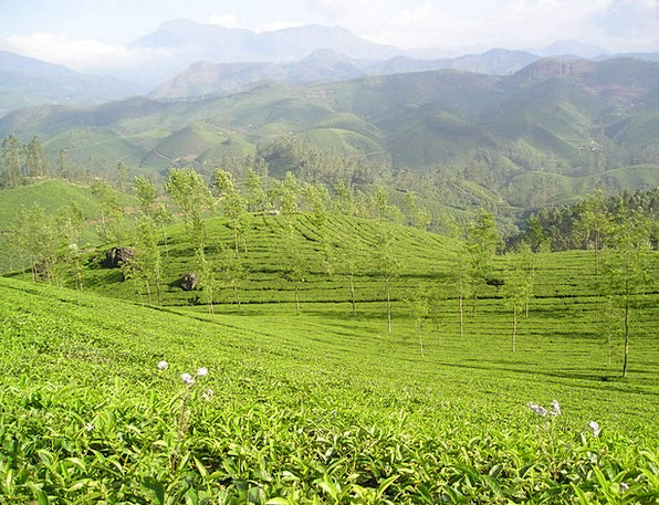 India T-shirt Tea Plantation Tee Plantation Estate