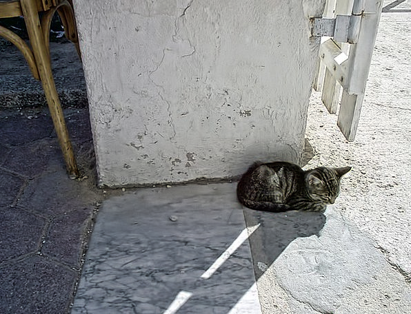 Cat Feline Leaden Sweet Sugary Gray Tunisia The Re