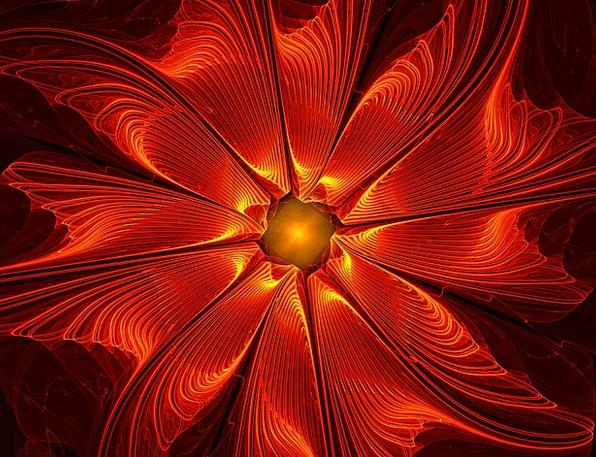 Apophysis Nonconcrete Fractal Abstract Flower Flor