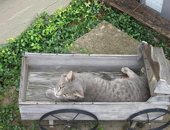 Cat Feline Leaden Wagon Carriage Gray Garden Plot
