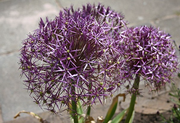 Attractive Good-looking Elaborate Flower Floret Pu