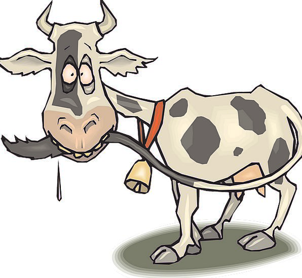 Cow Intimidate Foolish Animal Physical Crazy Tail