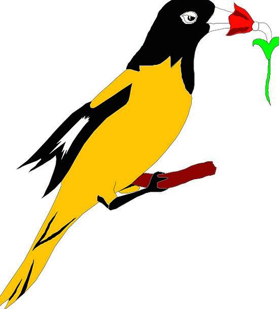 Flower Floret Annexes Beak Bill Wings Oriole Feath