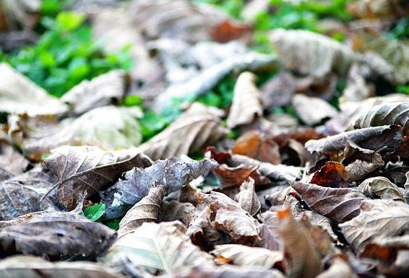 Leaves Greeneries Landscapes Sandbars Nature Autum