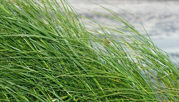 Grass Lawn North Sea Watts Wadden Sea Green Lime