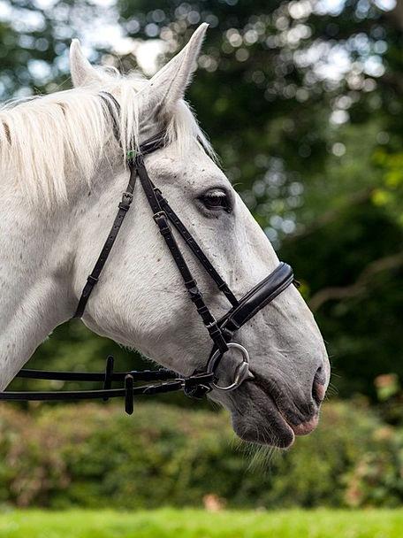 Horse Mount Landscapes Outline Nature Equine Horse