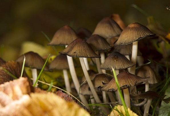 Mushrooms Burgeons Landscapes Woodland Nature Autu