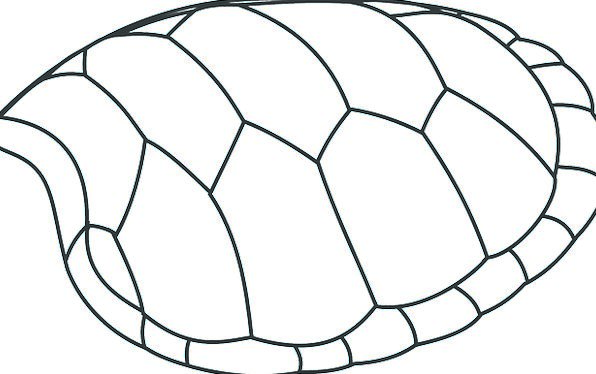 Turtle Bomb Patterns Designs Shell Free Vector Gra