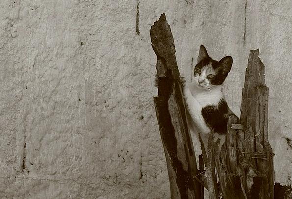 Cat Talon Feline Catlike Claw