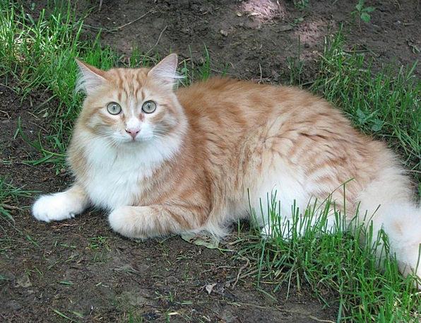 Cat Feline Bloodshot Hangover Aftermath Red Concer