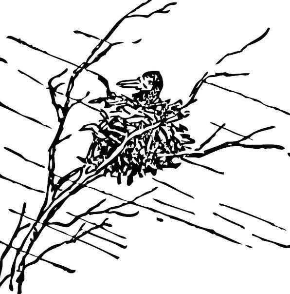 Bird Fowl Viewing Nests Shells Watching Plants Par