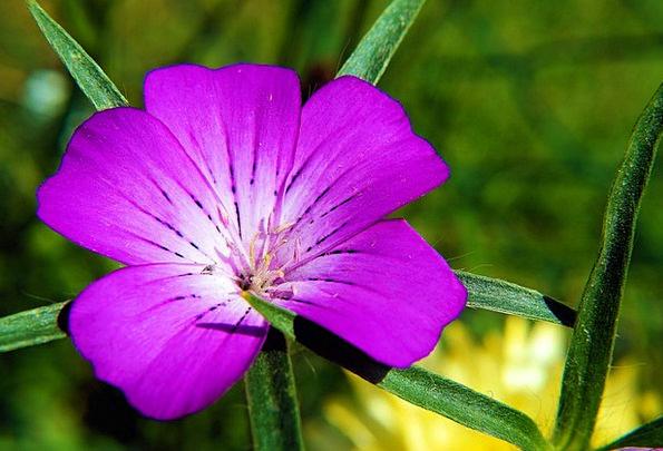 Flower Floret Plants Purple Elaborate Flowers Viol
