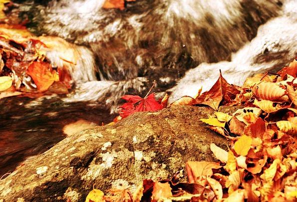 Autumn Fall Greeneries I myself Leaves Wood The Le