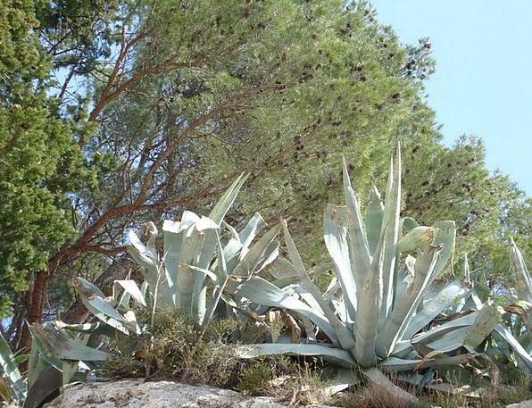 Cactus Landscapes Nature Mediterranean Sea Mediter
