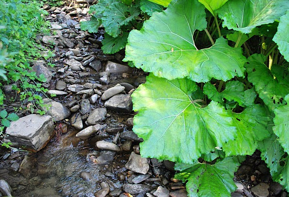 Creek Stream Water Aquatic Burdock Summer Straw-ha