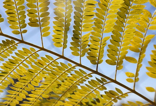 Leaf Foliage Landscapes Countryside Nature Tree Sa