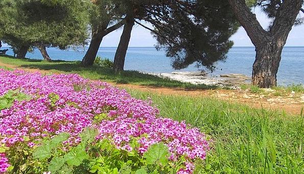 Sea Marine Landscapes Nature Croatia Adriatic Sea