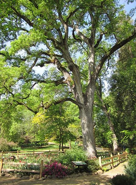 Oak Tree Landscapes Plot Nature Park Common Garden