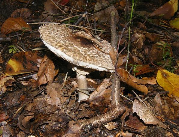 Giant Screen Fungus Landscapes Nature Mushrooms Bu