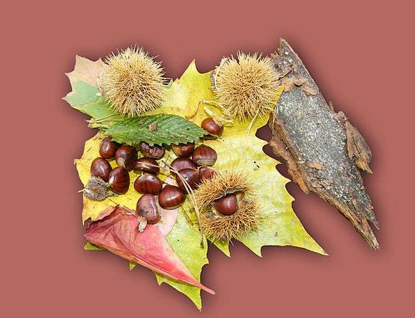 Maroni Fruits Ovaries Sweet Chestnuts Brown Chocol