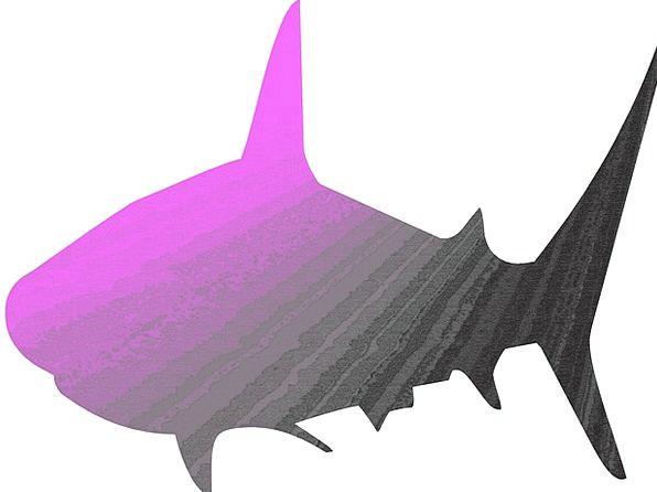Shark Swindler Angle Animal Physical Fish Colorful