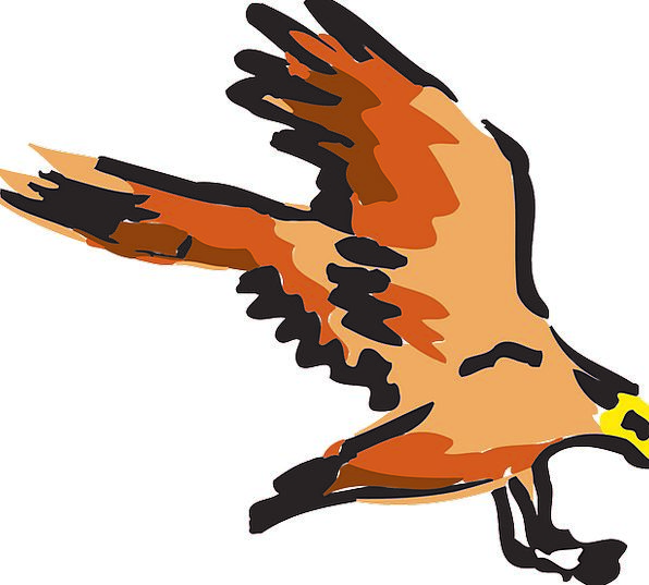 Red Bloodshot Carroty Bird Fowl Orange Flying Hove