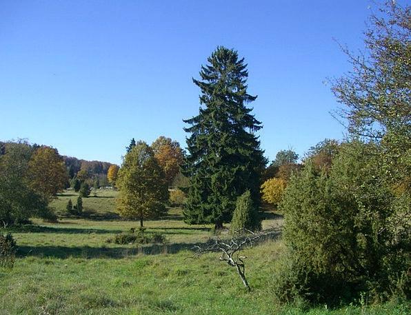 Autumn Fall Colorful Interesting Härtsfeld Trees P